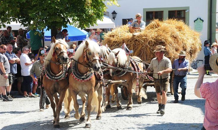 Starke Pferde und altes Handwerk - Bad Kötzting - Mittelbayerische