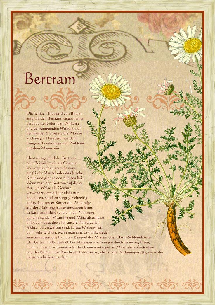 Bertram                                                       …