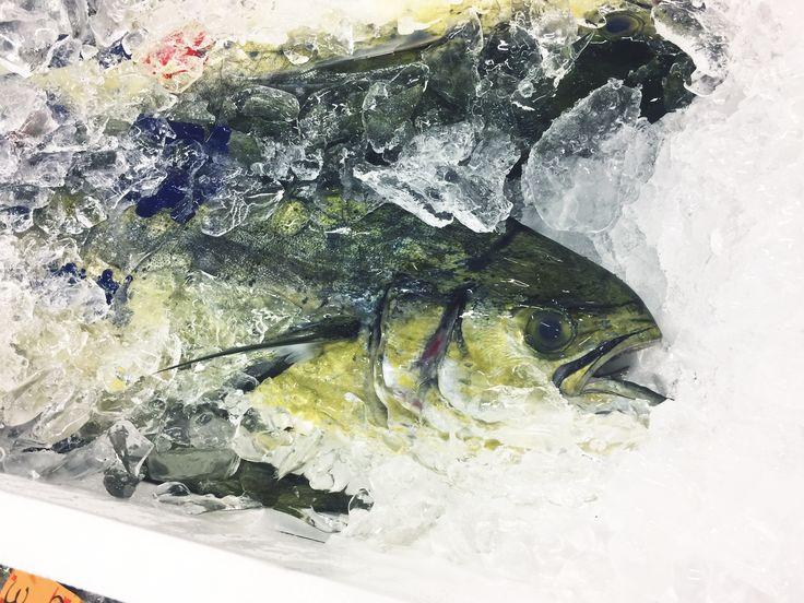 tsukiji  /  築地