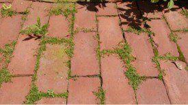 Avez-vous un problème avec les mauvaises herbes ? Voici une Astuce Naturelle pour vous en débarrasser…Peu de gens le savent !