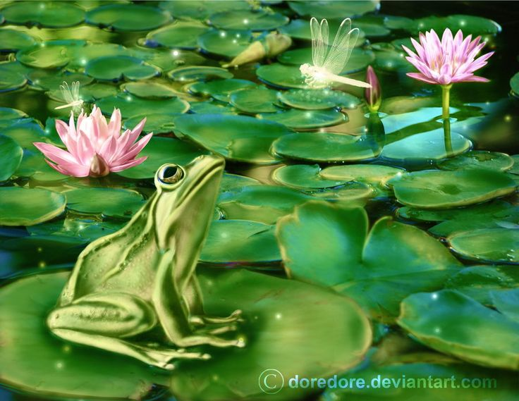 78 Best Images About Frog Shirts On Pinterest Peace