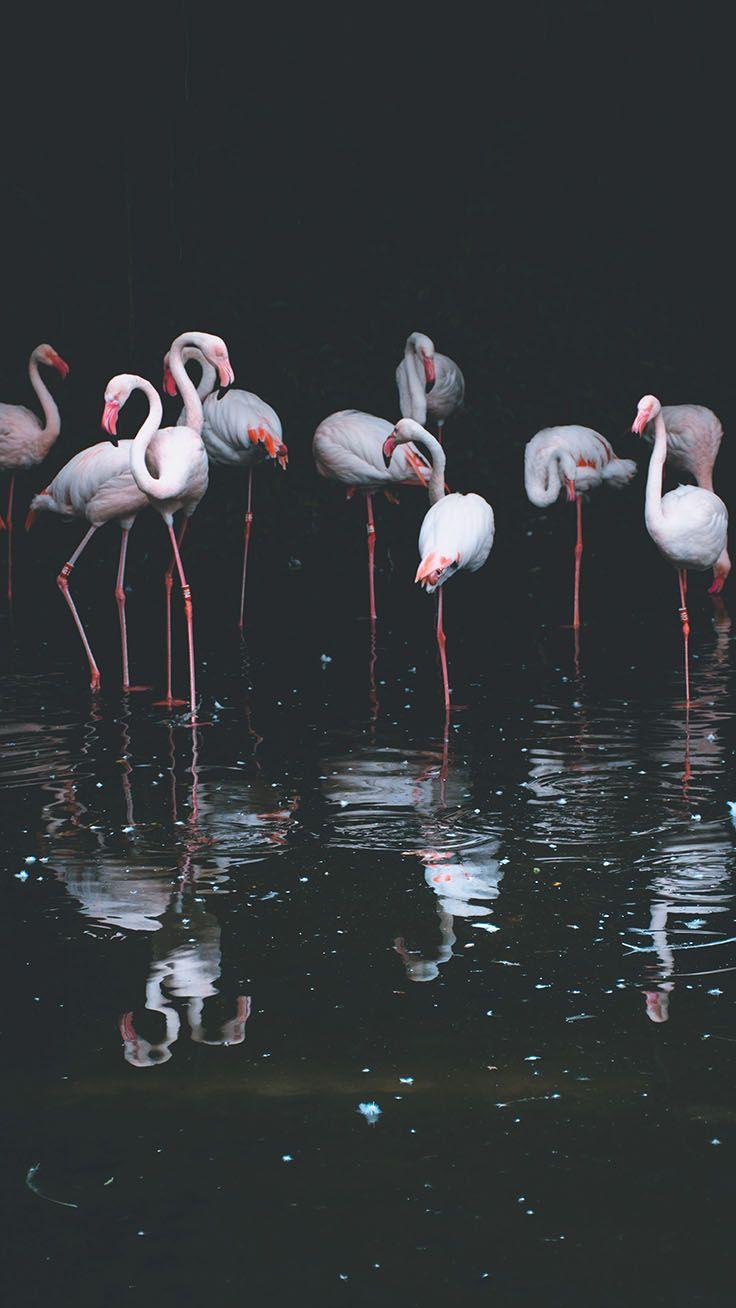 25 Super Pretty Iphone Xs Wallpapers Flamingo Wallpaper Animal