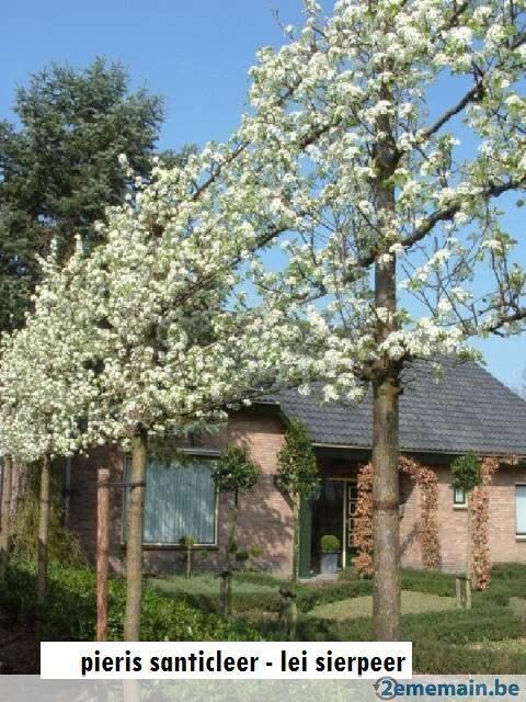 [tuin] Lei & Vorm bomen, misschien ook iets om te overwegen?