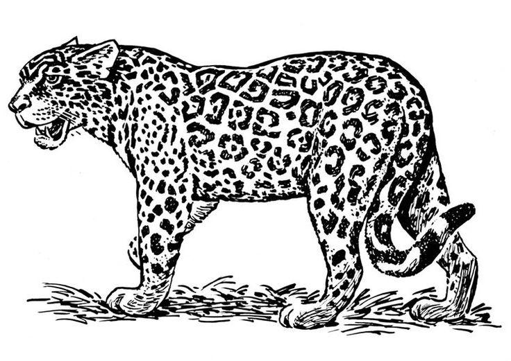 ausmalbild jaguar tier gratis  ausmalbilder tiere