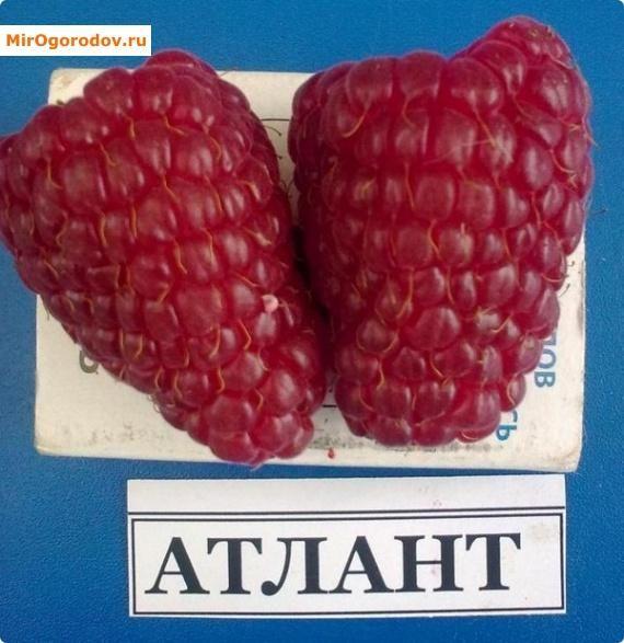 Размер плодов