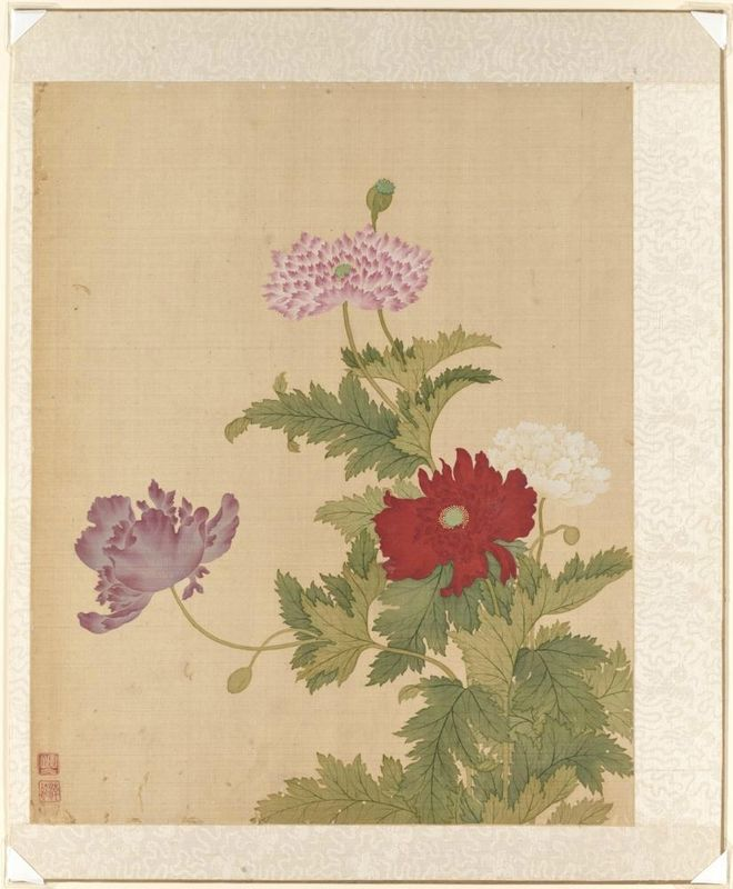Poppy, from the flowers of the twelve months: July, Yun Bing (Chinese, 1670 - 1710), 1670-1710, Qing dynasty (1644-1911). Album leaf, Ink and colors on silk. Asian Art Museum, The Avery Brundage Collection, B65D49.k. Photo: © Asian Art Museum.