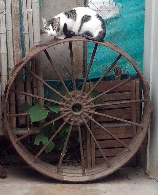Oliver y su rueda