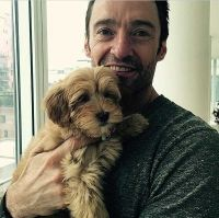 Hugh Jackman and family welcome Allegra Cavoodle to the family! via myoodle.com