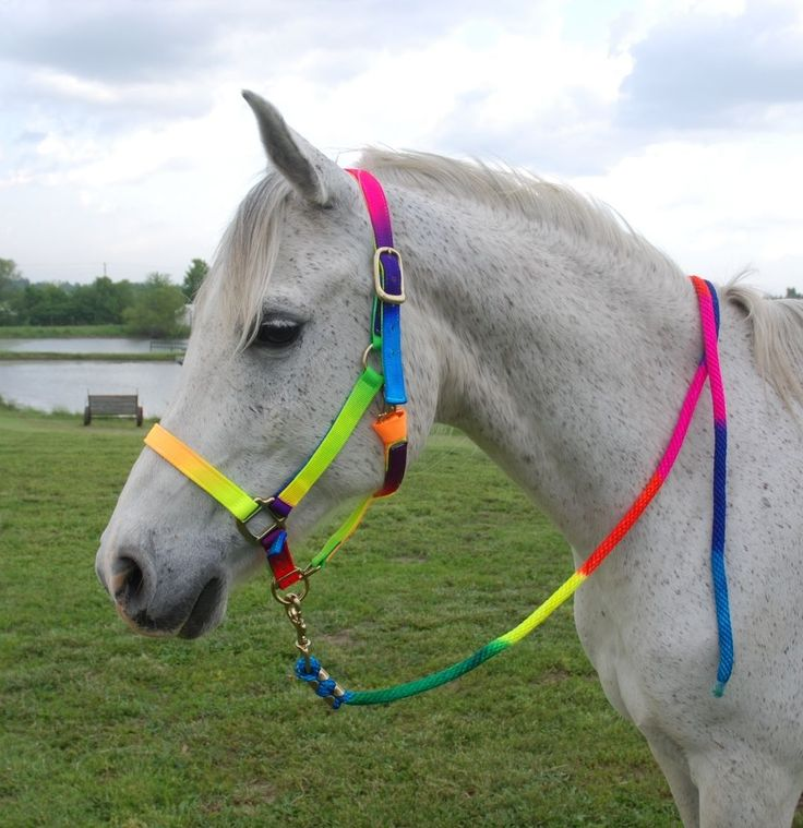 rainbow-coloured headcollar and lead rope