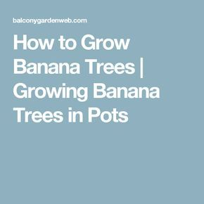 How to Grow Banana Trees | Growing Banana Trees in Pots