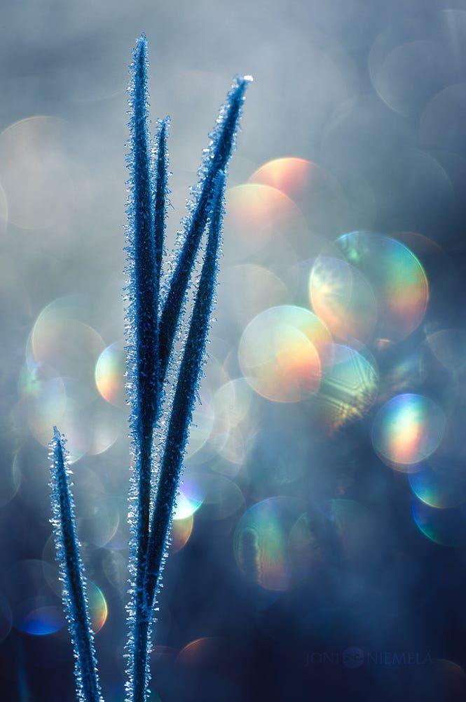Frozen Grass by Joni Niemelä on 500px
