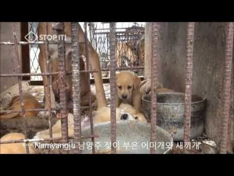 Governor Terry McAuliffe of Virgina, Governor Rick Scott of Florida, Governor Gary Herbert  of Utah, Premier Christy Clark of British Columbia(Canada) and Premier Annastacia Palaszczuk of Queensland(Australia): Tell Sister State, Gyeonggi Province, South Korea, That We're Opposed to the Torture and...