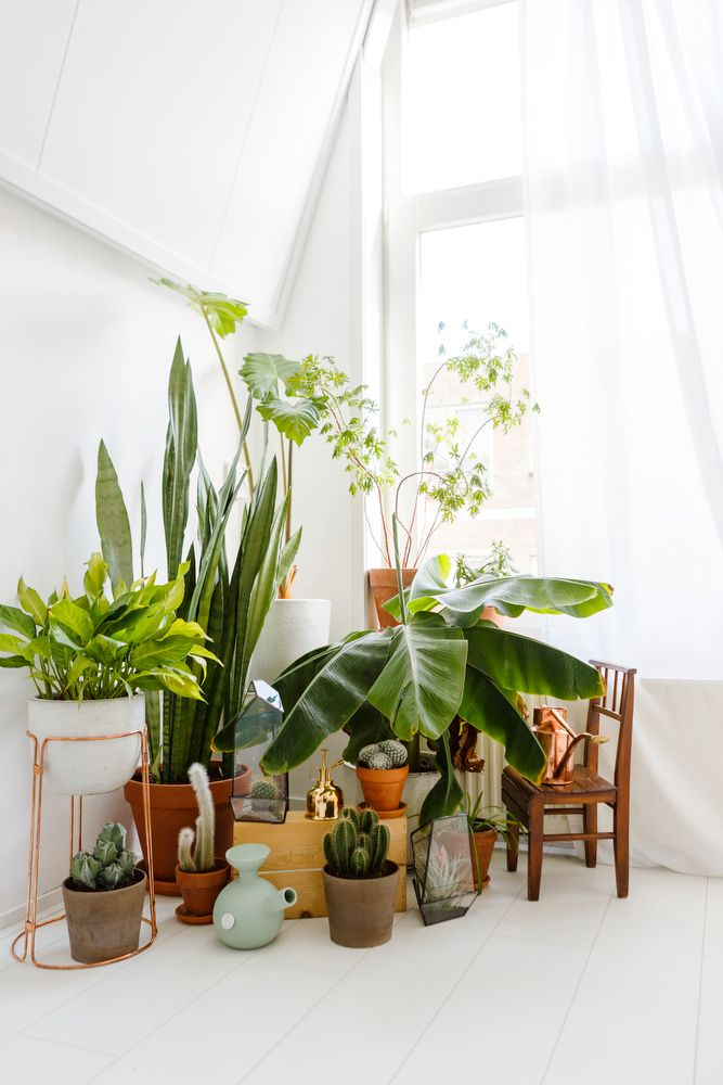 1000 Ideas About Indoor Planters On Pinterest Plant Decor Indoor Plant Decor And Living Room