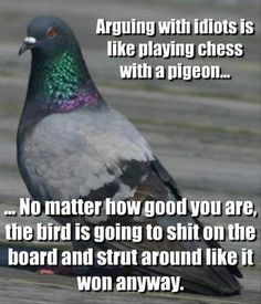 quotes about arguing with stupid people - Google Search