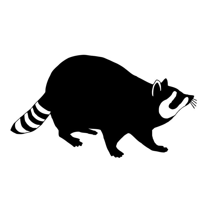 Raccoon Silhouette Google Search Vbs 2016 Racoon