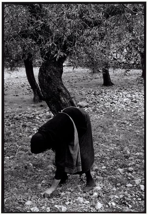 "Constantine Manos Greece. Peloponnesus. 1964. Gathering olives.""A Greek Portfolio"" p.16© Costa Manos/Magnum Photos"