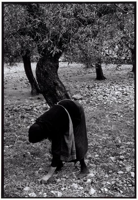 """Constantine Manos. Greece. Peloponnesus. 1964. Gathering olives. """"A Greek Portfolio"""" p.16. © Costa Manos/Magnum Photos"""