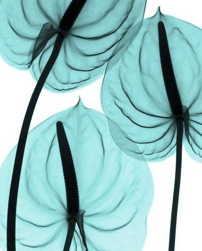 花のレントゲン05