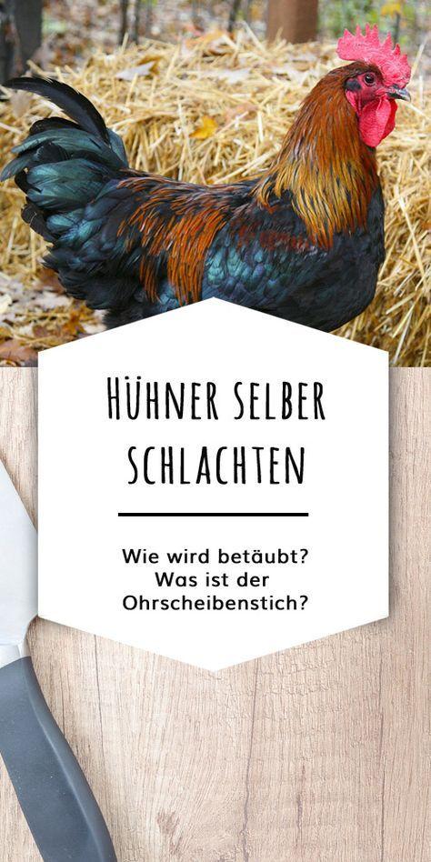 Hühner selber schlachten – was ist erlaubt und wie geht das