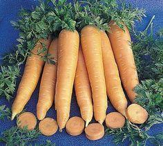 Coltivare le carote nell'orto - Coltivare l'orto