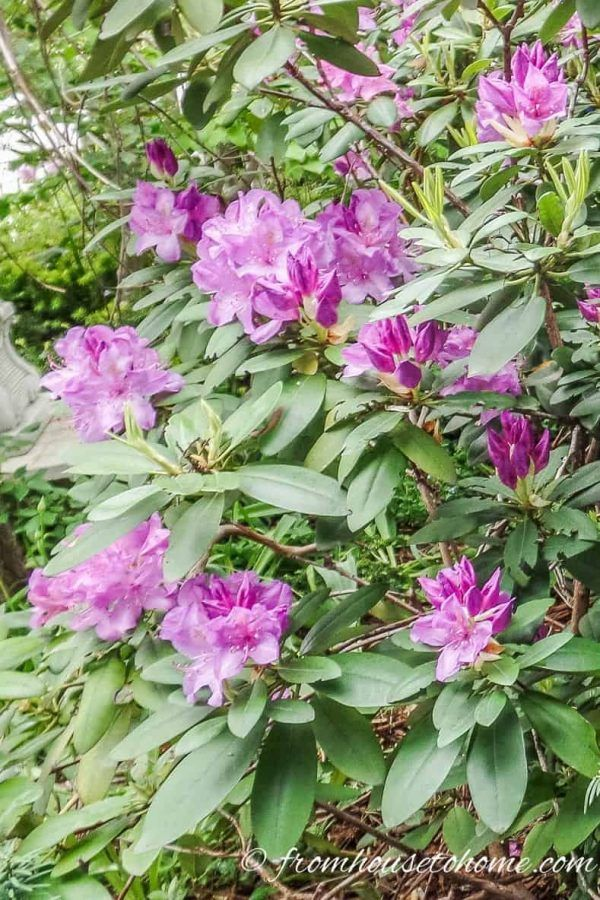 Best Gardens For Azaleas And Rhododendrons