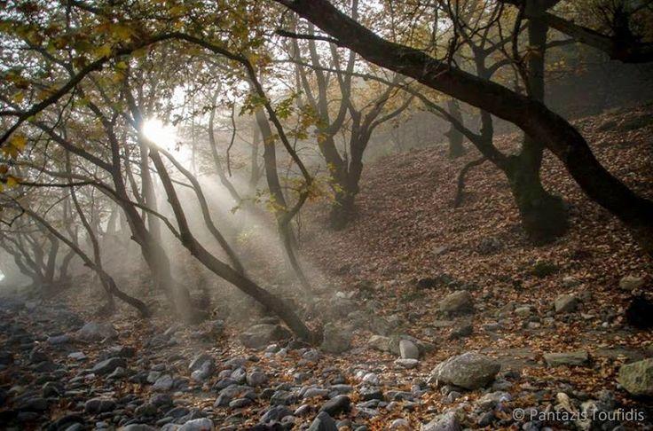 Konitsa Forest (photo by: Pantazis Toufidis)