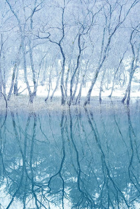 Icy blue forest in Hokkaido, Japan.