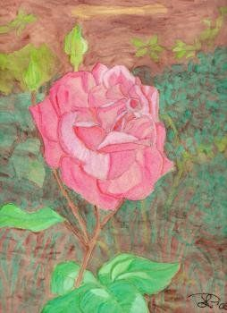 Rose, water color on paper