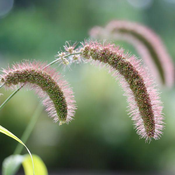 44 besten Pflanzen Bilder auf Pinterest Gartenpflanzen, Verandas - pflanzen topfen kubeln terrasse