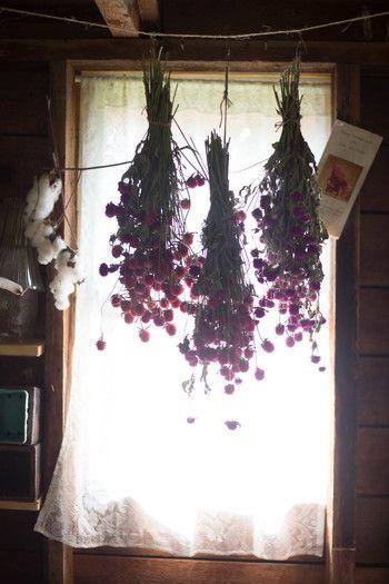 湿度が低く直射日光のあたらない窓辺などに吊るして乾燥させるハンギング法は、初めての方でも手軽に挑戦できる最もポピュラーな方法。ナチュラルな色合いに仕上がり、花がどんどん変化していく様子も見られます。