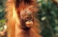 Reisroute - Maleisisch Borneo Familiereis - Familieavontuur reizen