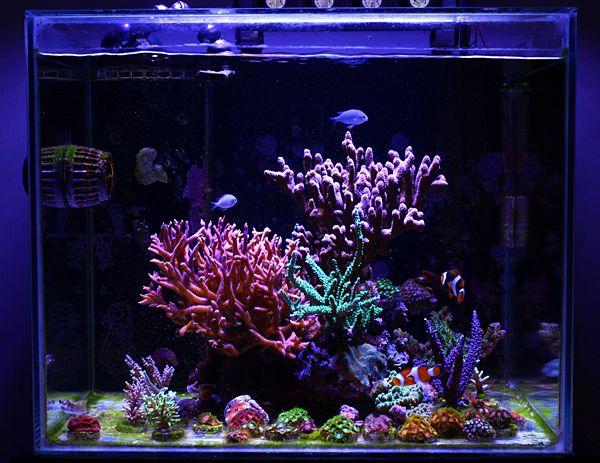 Reef tanks for beginners lulu s 25g indonesian nano reef for Aquarium recifal nano