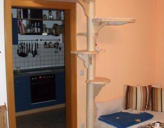 Deckenhoher Echtholz Katzen Kratzbaum deckenhoch stabil NEU mit Maßangaben basteln,Holz,Katzen,Katzenbaum,Katzenkratzbaum