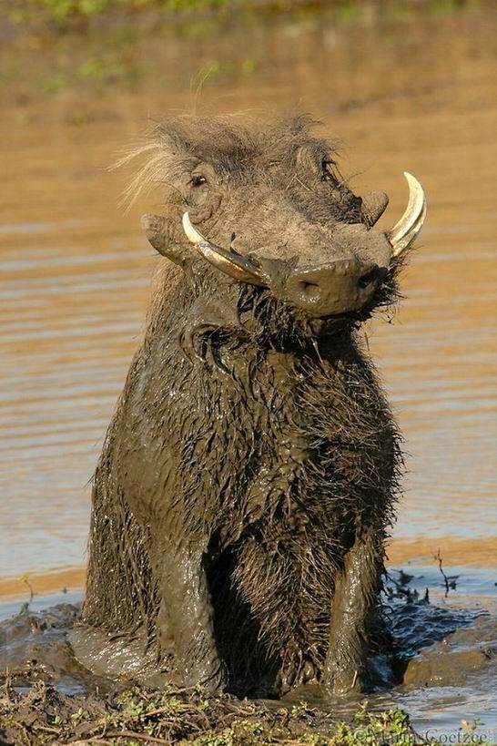 nothing like an good ol' fashioned mud bath