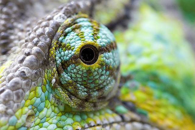 Beauty in the eye of the beholder...or the chameleon...