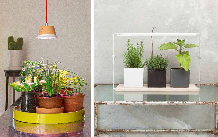 Binnenshuis kruiden kweken, bloemen laten bloeien en groenten laten groeien met behulp van een stijlvolle lamp? Let's meet Bulbo.