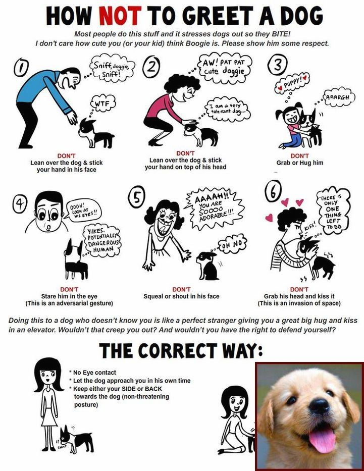 1 Have Dog Behavior Problems Learn About House Training Your