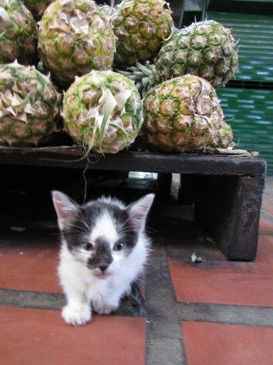 Hey #littlecat ! Give me a smile !!!! #pineapples #photography #learningalot !