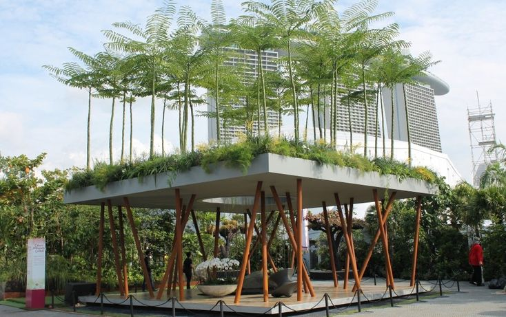 Schizolobium parahyba (Brazilian Fire/Fern Tree) from the Sacred Grove Garden designed by Wilson McWilliam Studio at the Singapore Garden Festival 2014. See details: http://bit.ly/1AGrqfL