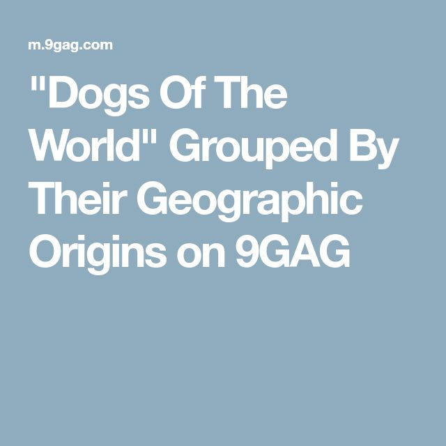"""Dogs Of The World"" Grouped By Their Geographic Origins on 9GAG"