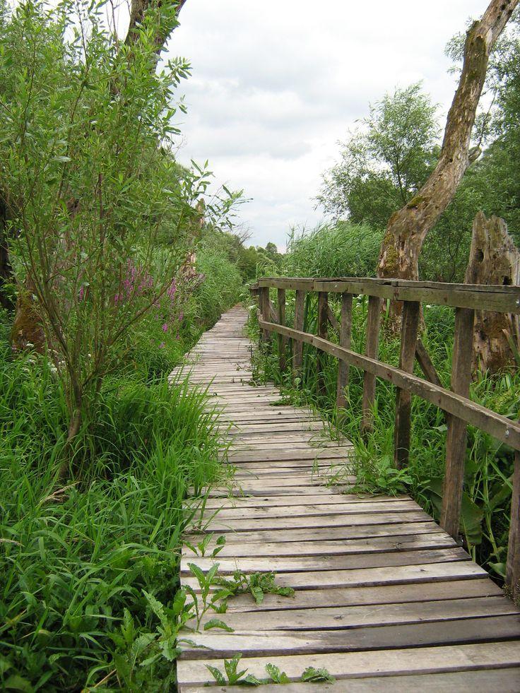 Ártéri Tanösvény (Vác): A tanösvény Vác déli végén (a váci Liget mellett), a Duna-Ipoly Nemzeti Parkhoz tartozó váci ártéri erdő területén található, és csatlakozik a Budapest-Szob kerékpárúthoz is. A botanikai-zoológiai tanösvény a Duna folyót egykor végigkísérő ártéri erdők egyik maradványát mutatja be. Az erdő legszebb részeit gyakran borítja víz, ezért egy 510 méter hosszú, lábakon álló deszkaösvényt építettek ki.