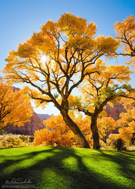 "Cottonwood near Moab, Utah - Adam Schallau i would love to be under that beautiful tree. ""Be content with your natural beauty."""