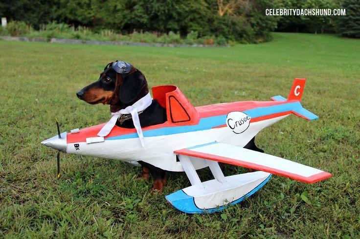 Dachshund Airplane Costume & Wiener Dog Race. love this!