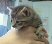 We rescued Tristan when he was only 3 weeks old!: Acquir Cat, Cat Guidance, Blog, It A Boys, Cat Accidents
