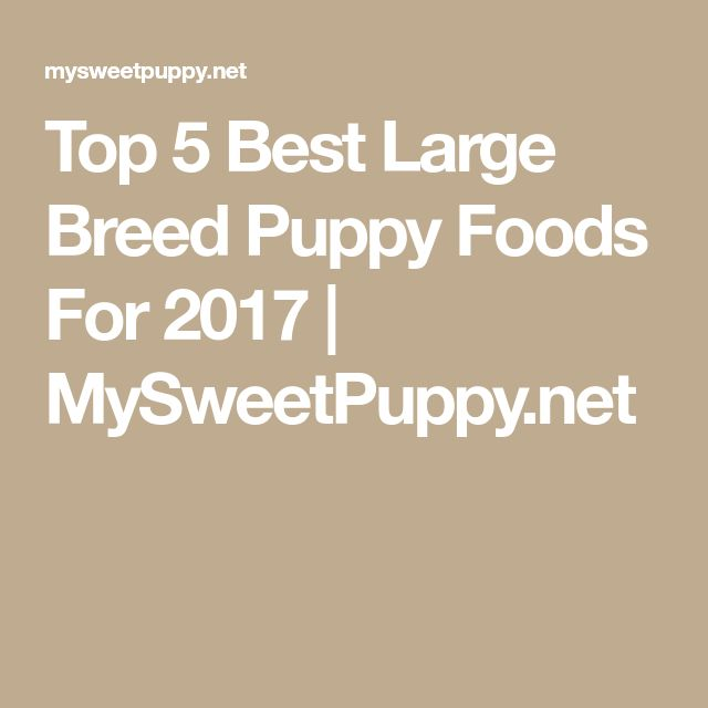 Top 5 Best Large Breed Puppy Foods For 2017 | MySweetPuppy.net