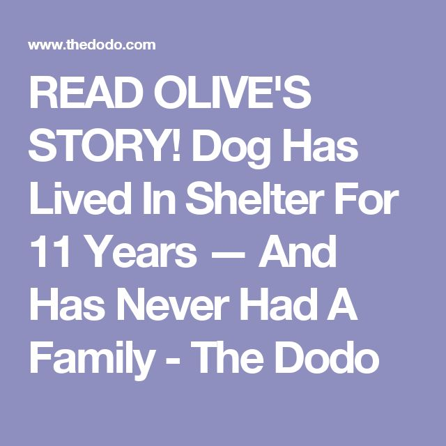 READ OLIVE'S STORY!  Dog Has Lived In Shelter For 11 Years — And Has Never Had A Family - The Dodo