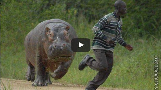 000000Lihatlah Video Serangan Binatang Buas Ke Atas Manusia Yang Dirakamkan Video serangan binatang buas atas manusia adalah berbahaya dan menakutkanjumlah pemangsa yang menyerang manusiadalam yang [...]