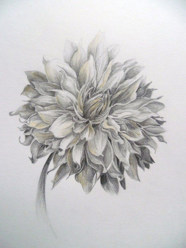 dalia drawings - Google Search