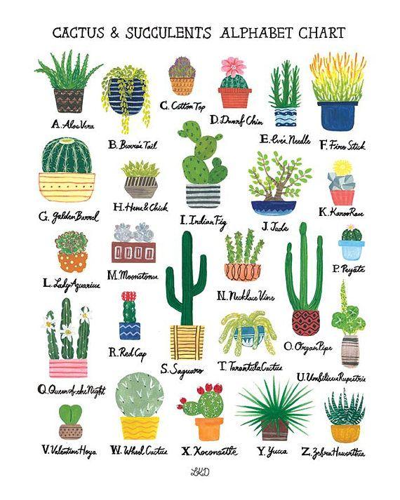 Cactus Succulents Alphabet Chart Art Print Cactus Cactus And