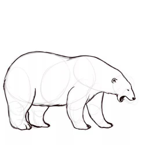 картинки белого медведя карандашом разведения